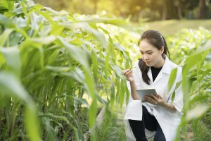 Female scientist in a field examining crops.